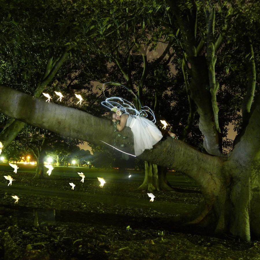 Fairy tree lighpainting photography